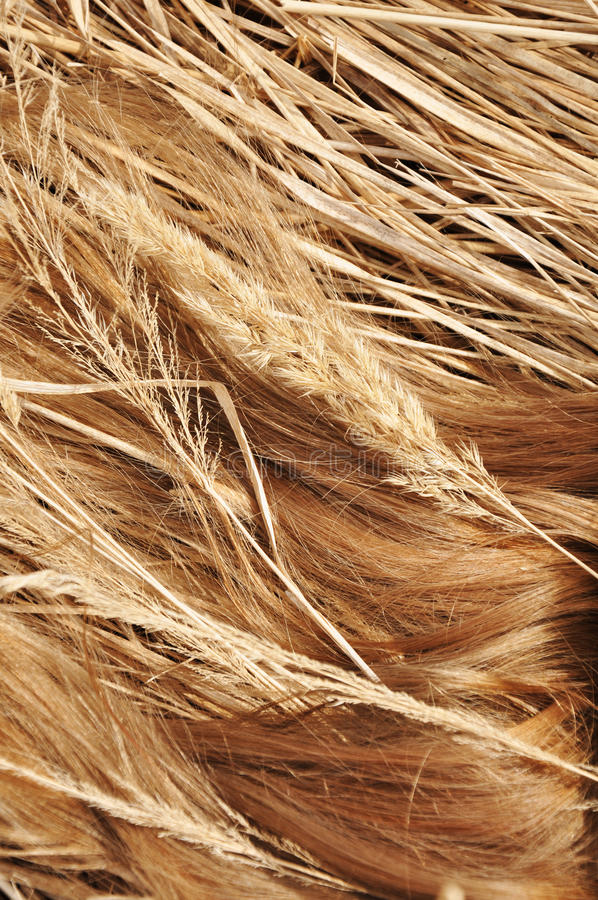 Fields&Hair photo stock