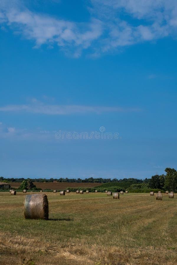 fields harvesting Åkerbrukt fält med himmel Kornskörd som skördar fotografering för bildbyråer