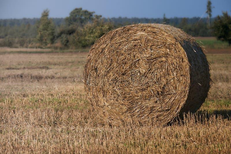 fields harvesting 与蓝天的农业领域 农村自然在农场土地 在草甸的秸杆 麦子黄色金黄收获 免版税库存图片