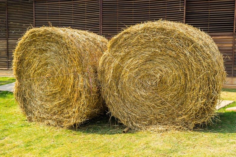 fields harvesting royaltyfri bild