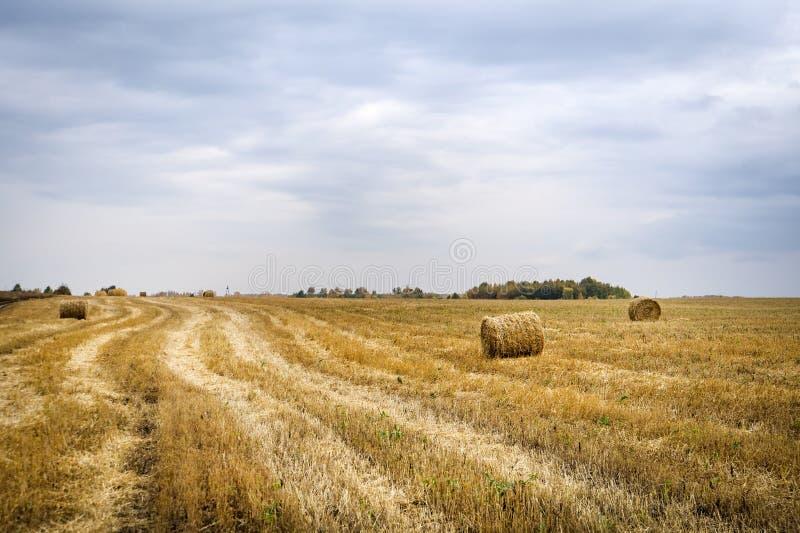 fields harvesting Höstackskördfält naturligt landskap för ountryside Åkerbruka fälthöstackar i en by eller en lantgård med himmel royaltyfria foton