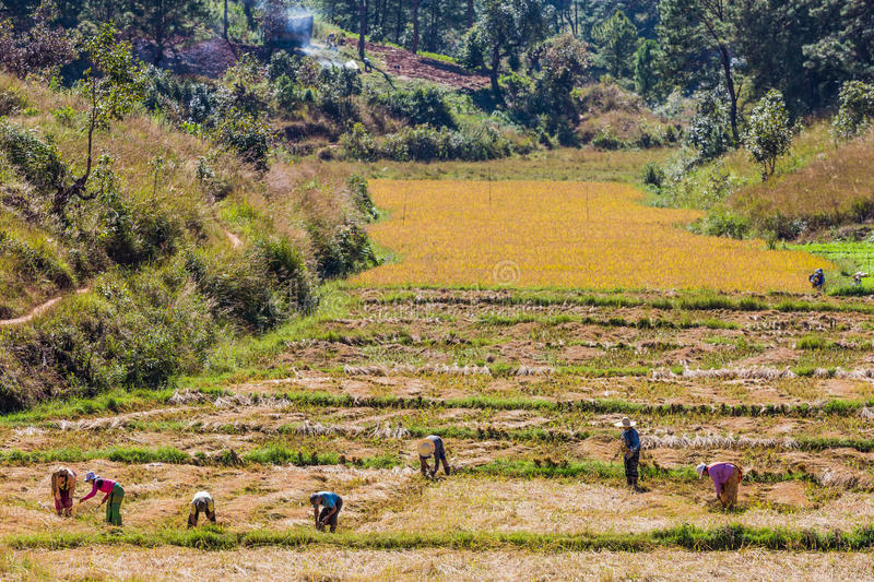 Fields landscaped Shan state Myanmar royalty free stock image