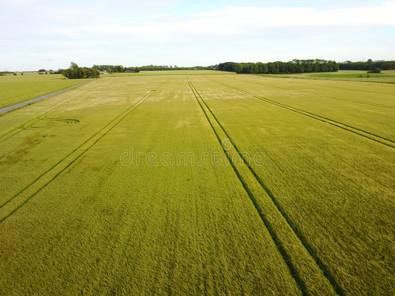 fields with lush grains royalty free stock photography