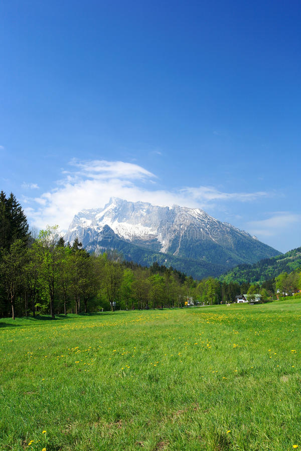 Download Fields and meadows stock photo. Image of mountain, alpine - 14652858