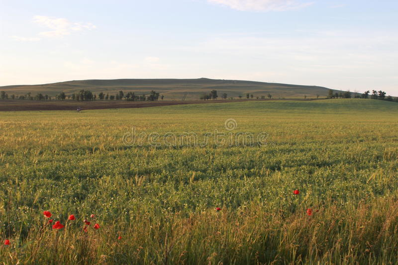 Fields and Meadows stock photos
