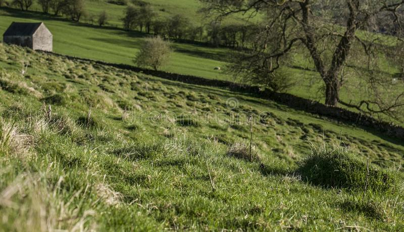 Fields and meadows, green view of the Peak District, the UK. royalty free stock image