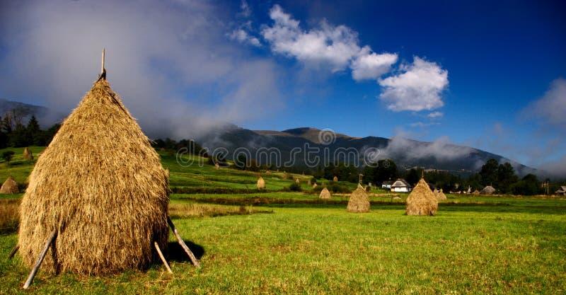 fields morgonen ukraine royaltyfria foton