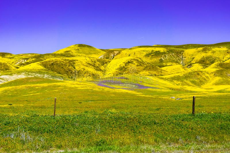 Fields  and mountains covered in wildflowers during a super bloom, Carrizo Plain National Monument, Central California royalty free stock image