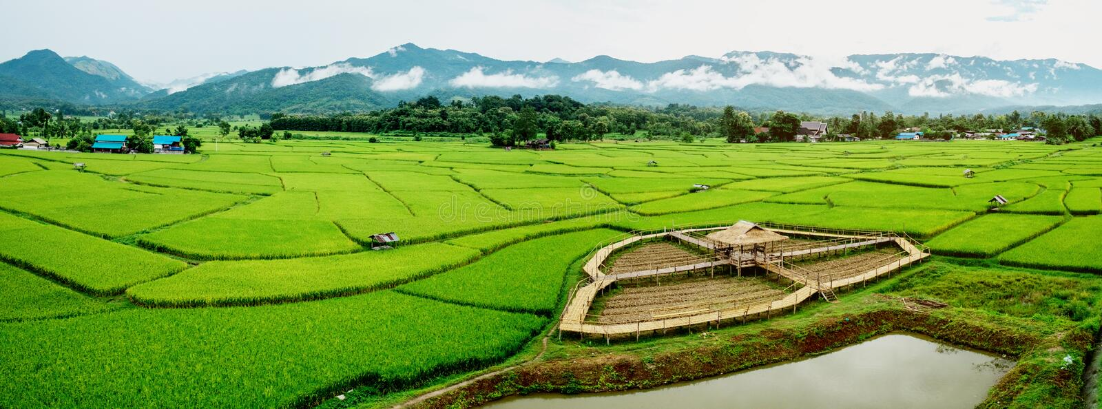 Fields in Nan, Thailand Panorama image.  royalty free stock photos