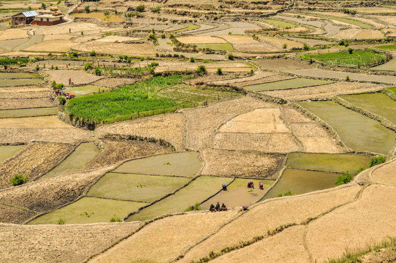 Fields in Nepal. Scenic view of traditional agriculture in Nepal stock image