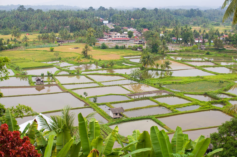 fields paddy fotografering för bildbyråer