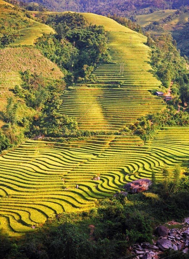 Download Fields rice arkivfoto. Bild av lopp, skörd, vietnam, berg - 19796158