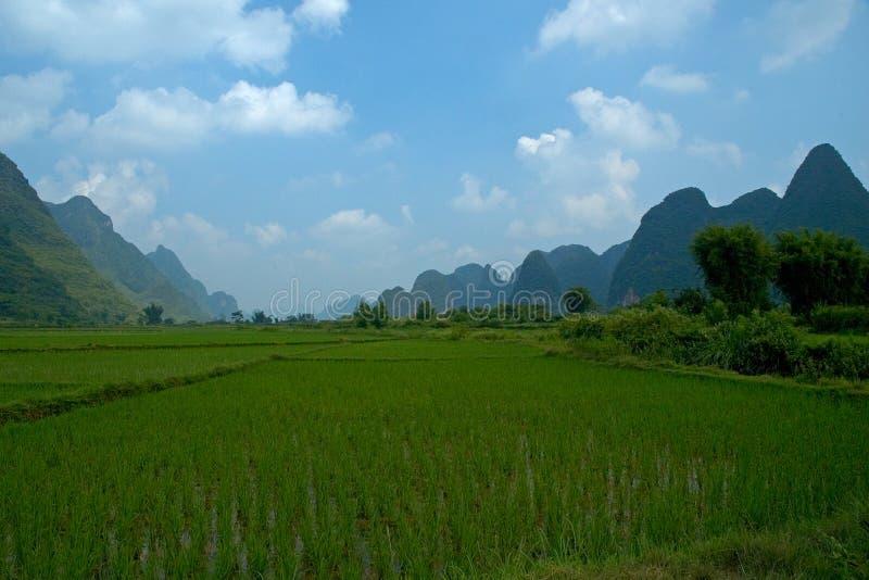 fields rice arkivbilder
