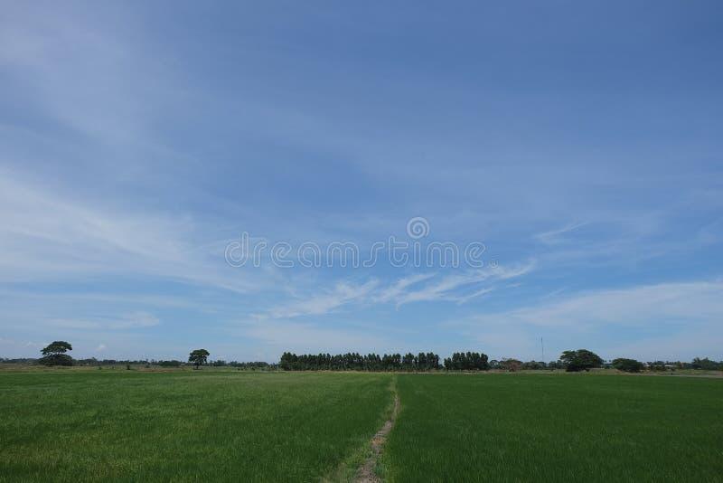 fields skyen royaltyfria bilder