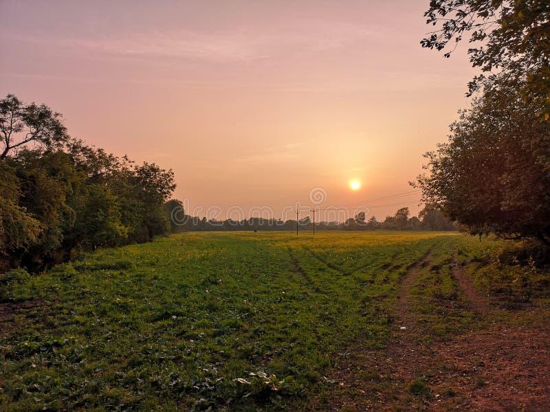 fields solnedgång royaltyfria bilder