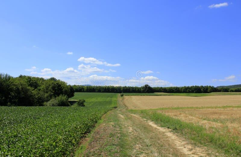 Fields. Soya field with wood in backgraund stock image