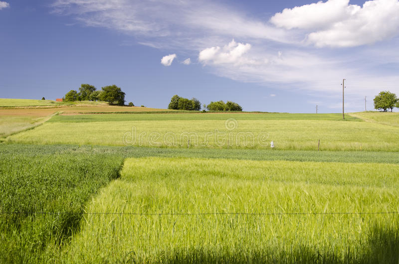Download Fields in spring stock photo. Image of clouds, field - 31369200