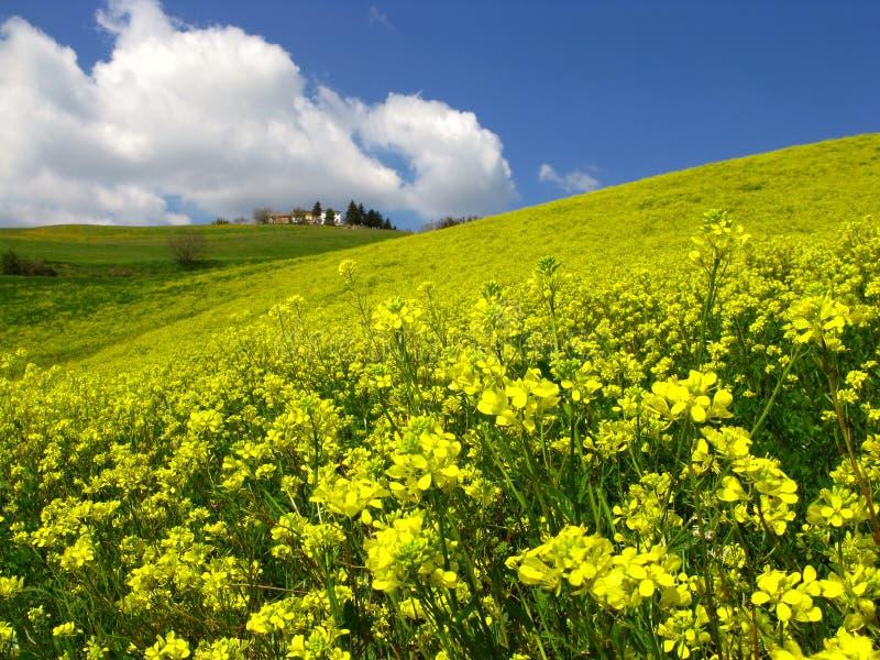 fields springtime royaltyfri foto