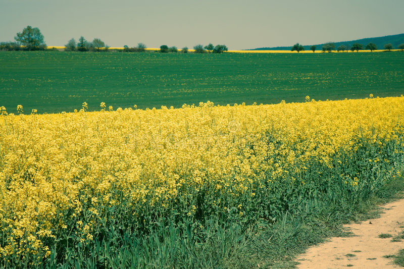 Fields in springtime royalty free stock images