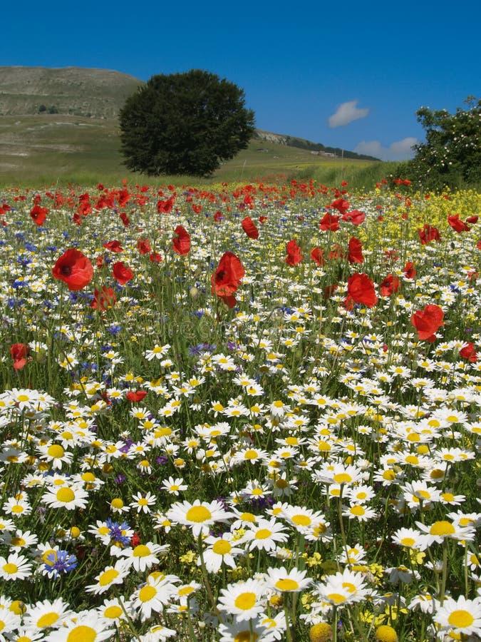 fields springtime arkivbilder