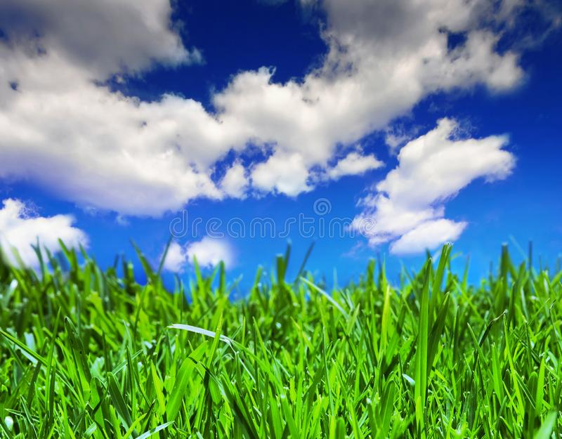 Fields Of Summer Stock Image