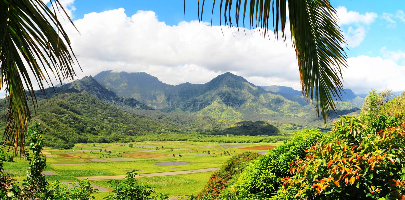 Fields of Taro, Hanalei Valley, Kauai, Hawaii stock images