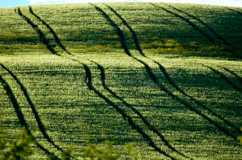 Fields with tractor tracks royalty free stock photo
