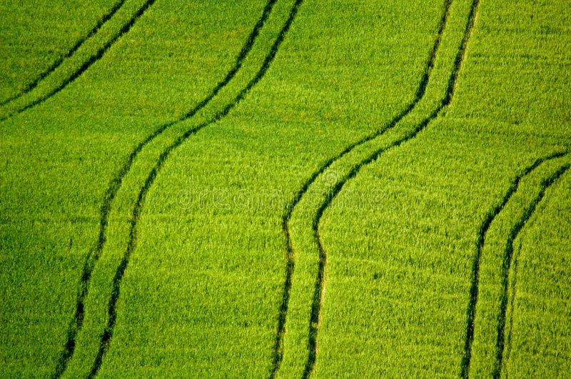Fields with tractor tracks royalty free stock image
