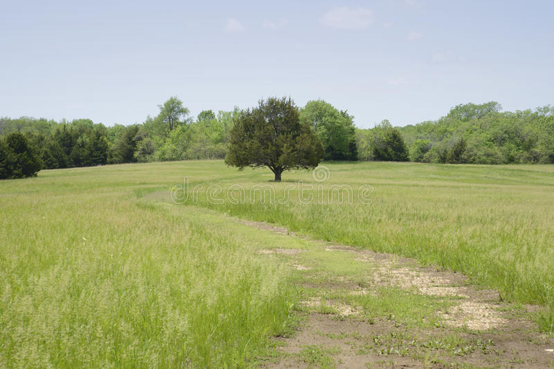 Fields and trees royalty free stock photo