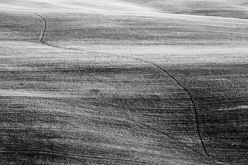 Fields in Tuscany Italy on curvy hills stock image
