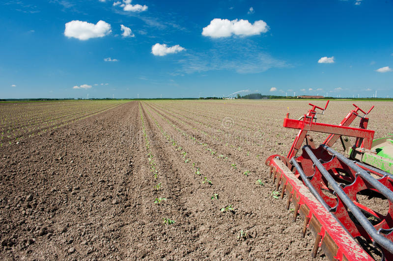 Download Fields With Young Vegetable Plants Stock Photo - Image of netherlands, mechanization: 17723588