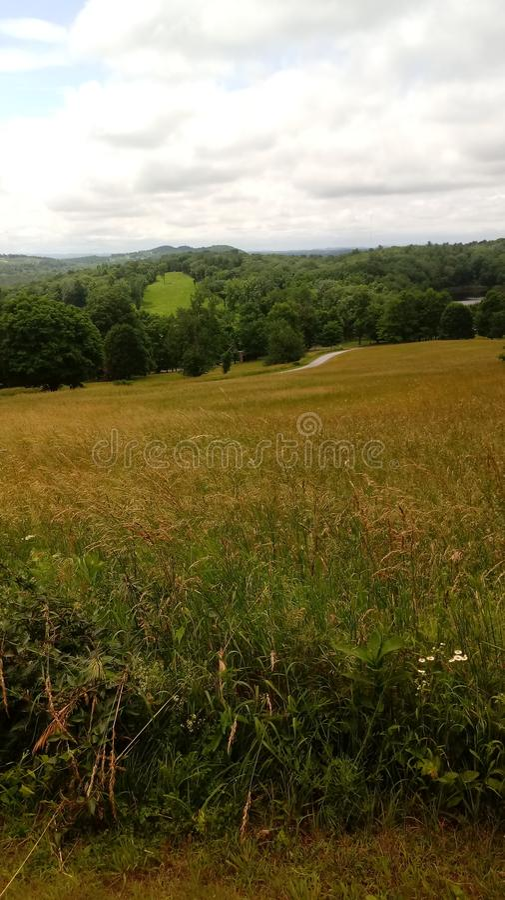 Fieldscapes royaltyfri foto