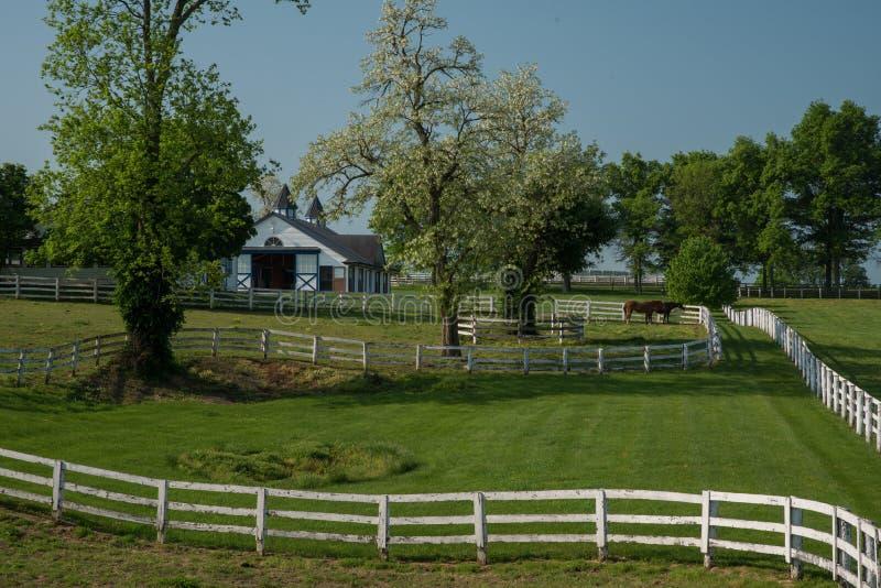 Fienarola del cavallo che pasce all'azienda agricola di Manchester a Lexington Kentucky immagini stock