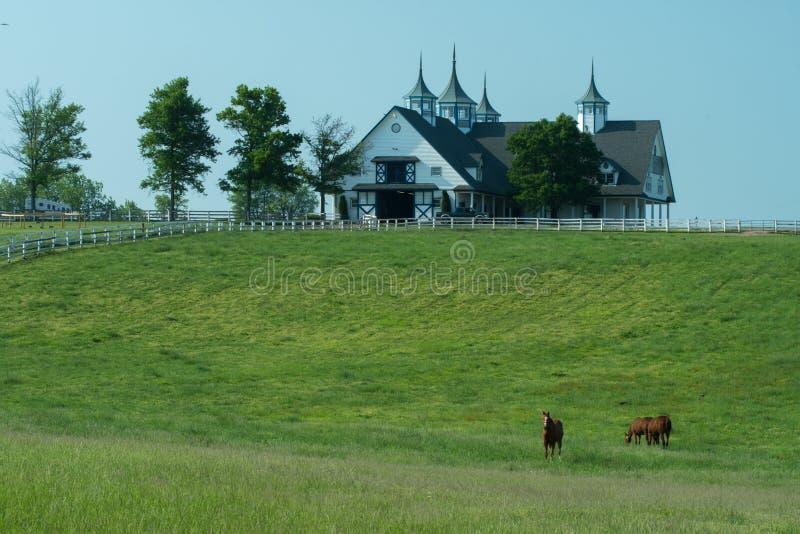 Fienarola del cavallo che pasce all'azienda agricola di Manchester a Lexington Kentucky fotografia stock libera da diritti