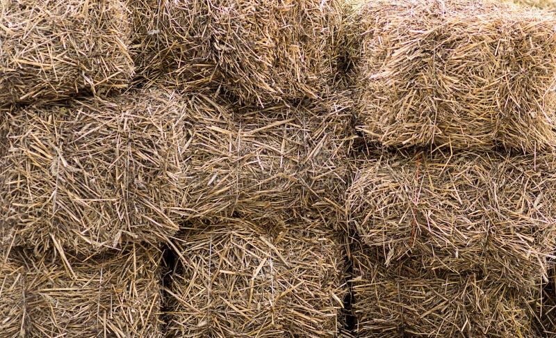 Fieno asciutto dello sfondo naturale impilato in una parete dell'alimentazione del bestiame del blocco fotografia stock libera da diritti
