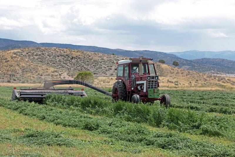 Fieno dell'erba medica di taglio del coltivatore in estate fotografia stock