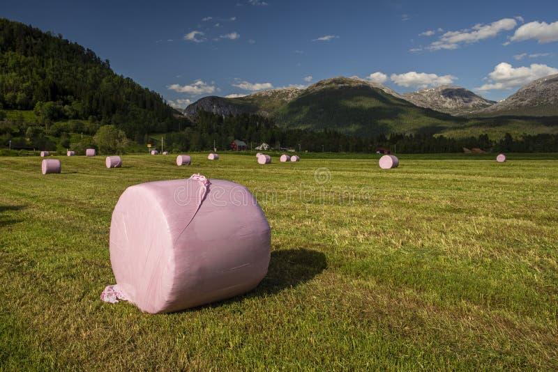 Fieno-palle rosa sotto un cielo blu profondo fotografia stock