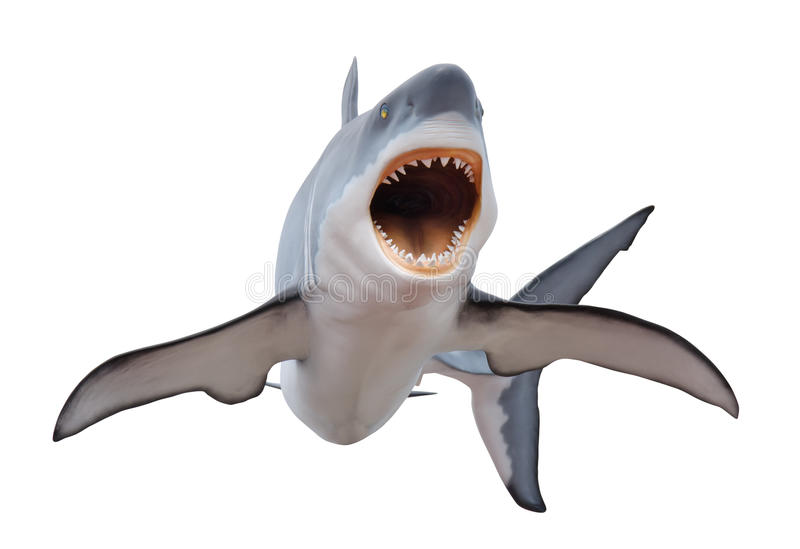 Fierce great white shark isolated on white. A fierce great white shark with mouth open and ready to strike isolated on a white background