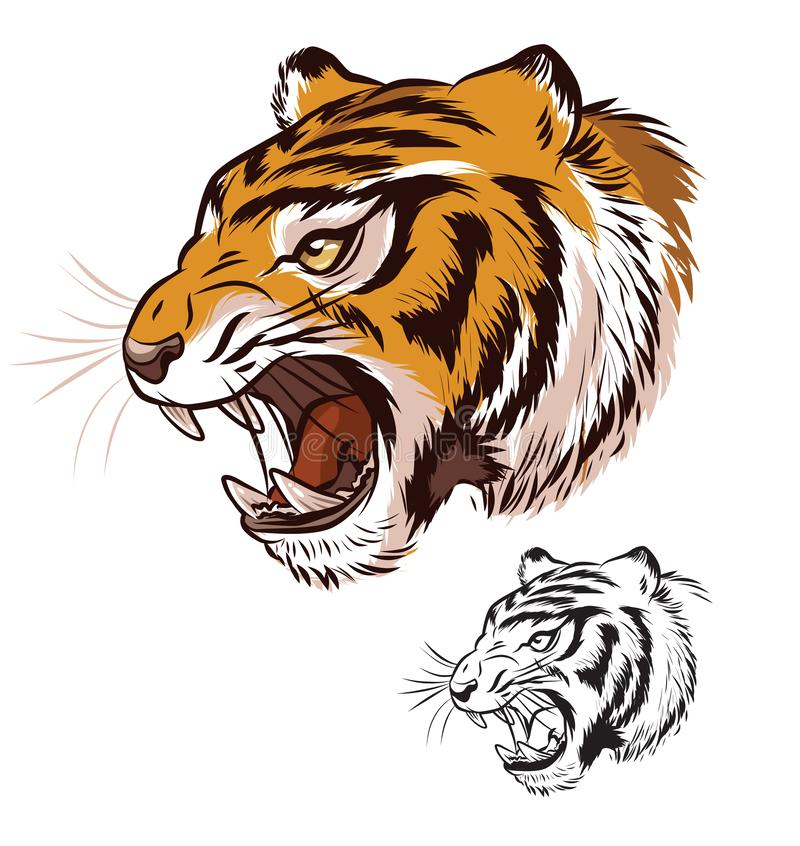Fierce Roaring Tiger Head Illustration royalty free stock photography