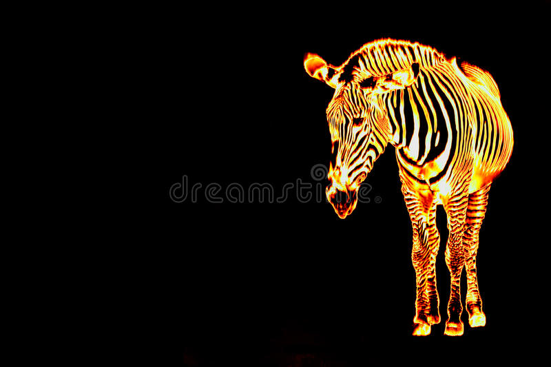 Fiery Flaming Zebra royalty free illustration