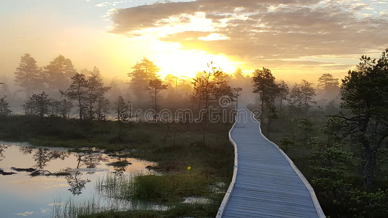 Fiery sunrise in the bog stock image