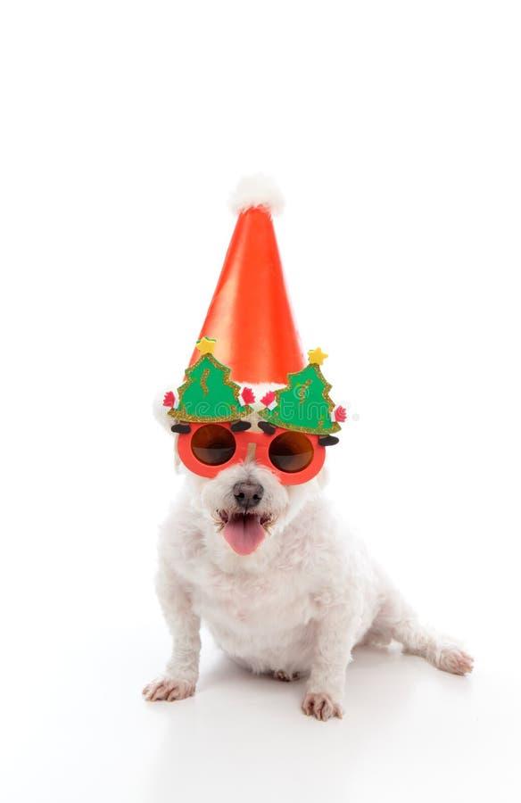 Fiesta de Navidad feliz del perro imagen de archivo libre de regalías
