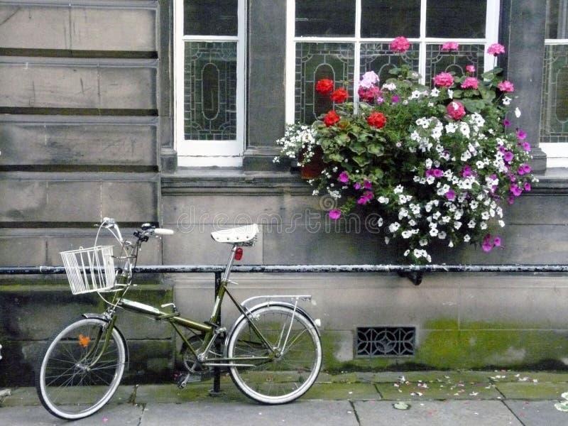 Fiets en bloemen royalty-vrije stock afbeeldingen