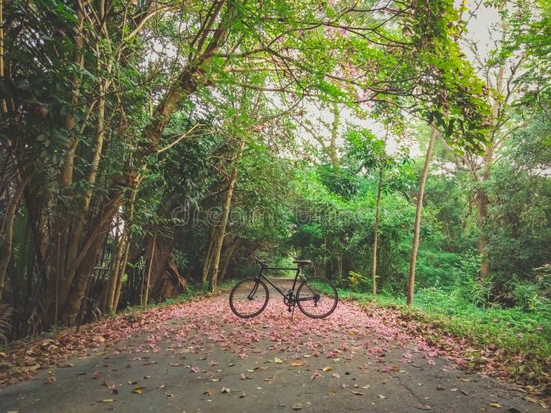 08 - Fiets het cirkelen op de weg in een groot bos royalty-vrije stock fotografie
