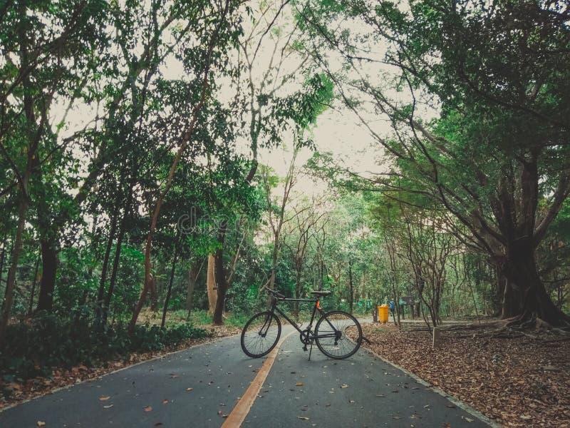 25 - Fiets het Cirkelen op een brede weg in een groot bos stock afbeelding