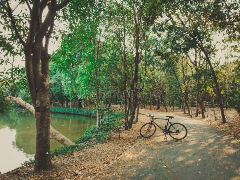 01 - Fiets het cirkelen op een moerassige weg in een park stock foto