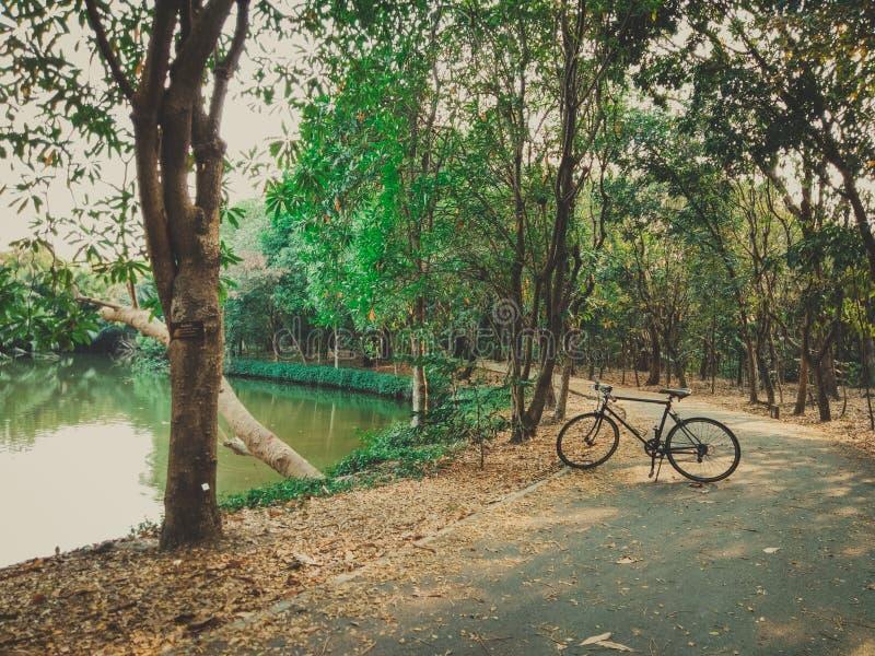 03 - Fiets het cirkelen op een moerassige weg in een park stock foto's