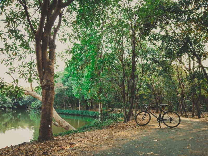 02 - Fiets het cirkelen op een moerassige weg in een park royalty-vrije stock fotografie