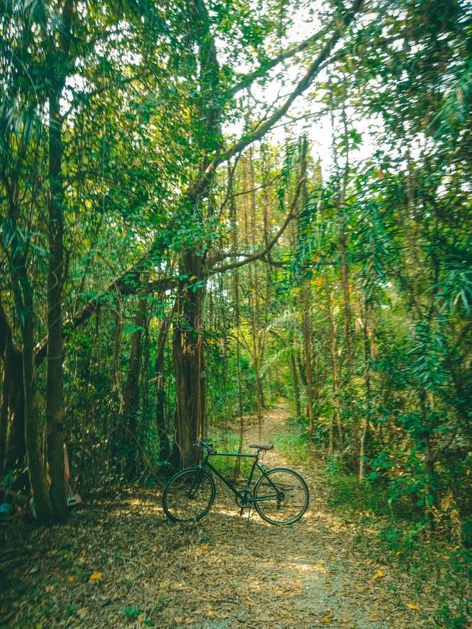 04 - Fiets het cirkelen in het wildernisbos stock afbeelding