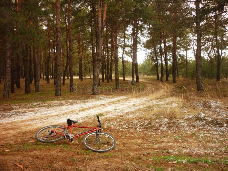 fiets in het hout royalty-vrije stock afbeelding